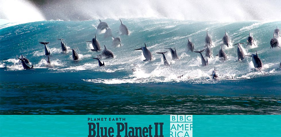 Planet Earth: Blue Planet 2, on BBC America, currently in free preview