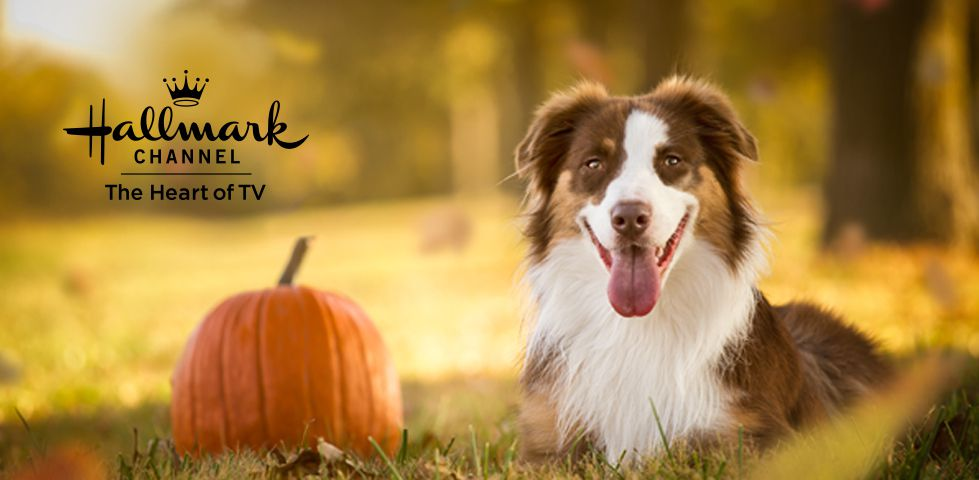 Dog laying in a field next to a pumpkin, with the Hallmark Channel logo over the top