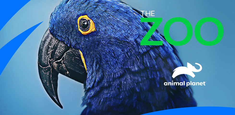 Blue bird with large black beak | The Zoo, on Animal Planet