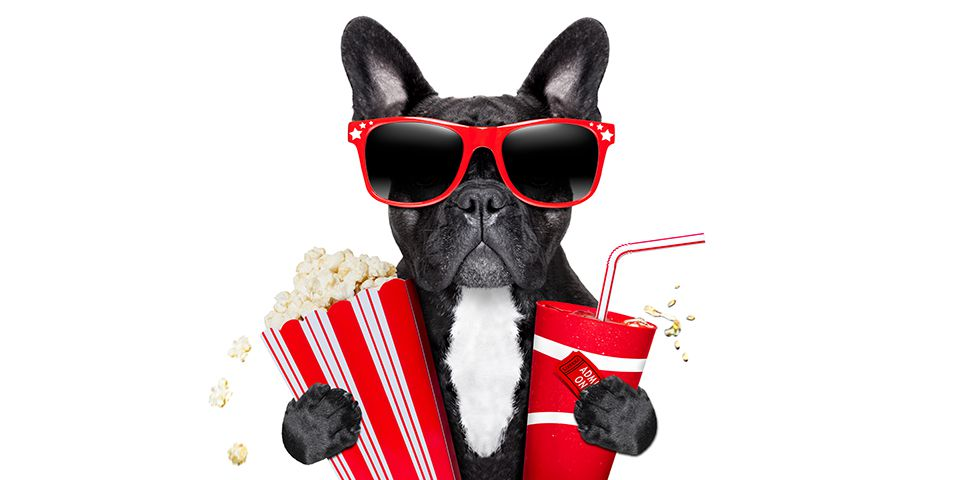 Frenchie dog holding a bucket of popcorn, cup of soda, and movie ticket