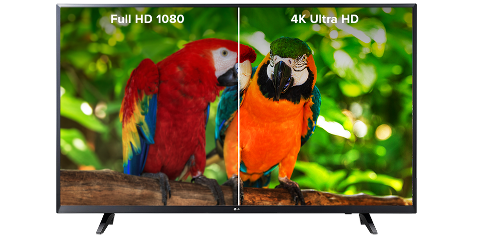 Two parrots on a branch - 4K Ultra HD shows crisper and clearer than 1080 HD